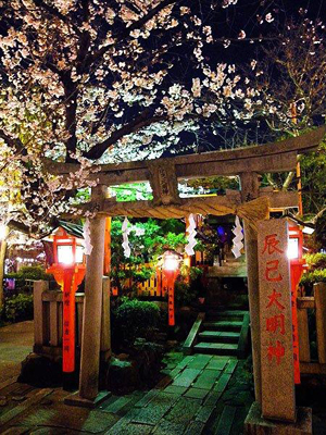 Gion Shirakawa night cherry blossom illumination