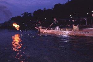 Cormorant fishing at Uji river